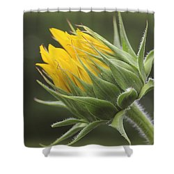 Summer's Promise - Sunflower Shower Curtain
