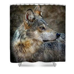 Summertime Coated Wolf Shower Curtain by Elaine Malott