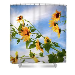 Summertime Shower Curtain