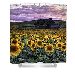 Summertime Sunflowers Shower Curtain
