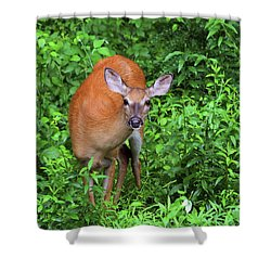 Summertime Visitor Shower Curtain by Karol Livote