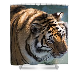 Shower Curtain featuring the photograph Summertime Wading by Colleen Coccia