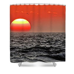 Sun And Sea Gull Ver1 Shower Curtain