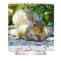 Sun Bathing Squirrel Shower Curtain by Kathy Kelly