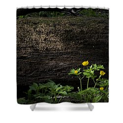 Sun Beam On Log Shower Curtain