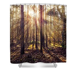 Shower Curtain featuring the photograph Sun Beams In The Autumn Forest by Dmytro Korol