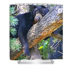 Sun  Bear - Afternoon Nap Shower Curtain