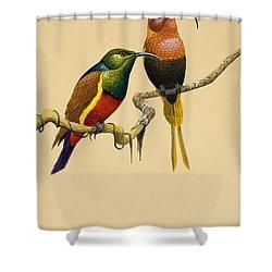 Sun Birds Shower Curtain by English School