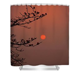 Sun Blossoms Nature Asia  Shower Curtain