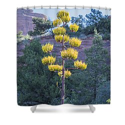 Sun Brightened Century Plant Shower Curtain