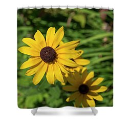 Sun Drenched Daisy Shower Curtain