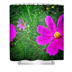 Shower Curtain featuring the photograph Sun-drenched by Olivier Calas