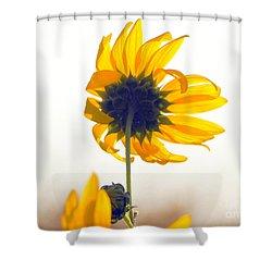 Sun Flower 101 Shower Curtain