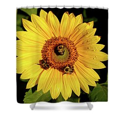 Sunflower And Bees Shower Curtain by Nancy Landry