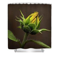 Sun Flower Blossom Shower Curtain