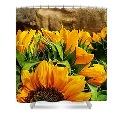 Sun Flowers And Tomatoes Shower Curtain