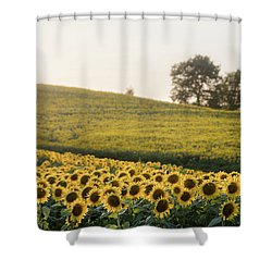 Sun Flowers II Shower Curtain