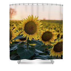Sun Flowers IIi Shower Curtain
