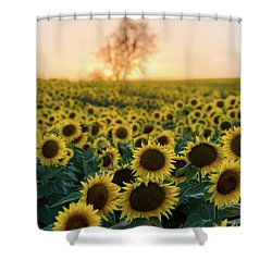 Sun Flowers Iv Shower Curtain