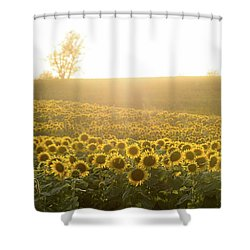 Sun Flowers Shower Curtain
