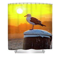 Sun Gull Shower Curtain
