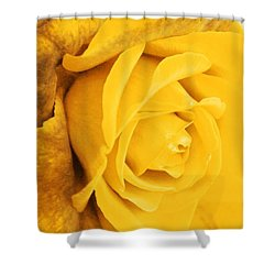 Shower Curtain featuring the photograph Sun Kissed Rose by Athala Carole Bruckner