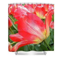 Sun Lights Tulips After Spring Rain Shower Curtain