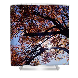Shower Curtain featuring the photograph Sun Peaking Threw by Debra Crank