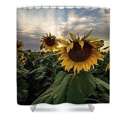 Shower Curtain featuring the photograph Sun Rays  by Aaron J Groen