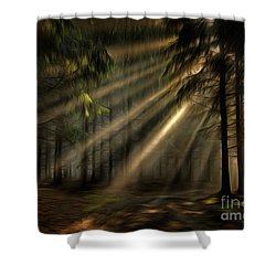 Sun Rays In The Forest Shower Curtain by Michal Boubin