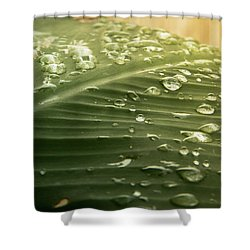 Sun Shower Shower Curtain