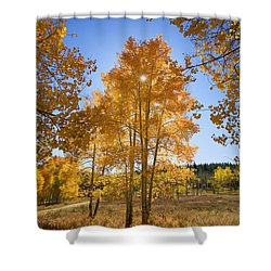 Sun Through Aspens Shower Curtain by Ron Dahlquist - Printscapes