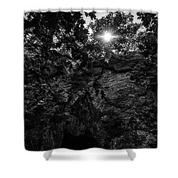 Sun Through The Trees Shower Curtain