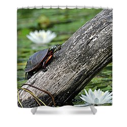 Shower Curtain featuring the photograph Turtle Sunbathing by Glenn Gordon