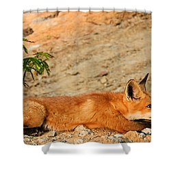 Shower Curtain featuring the photograph Sunbathing by Kristin Elmquist