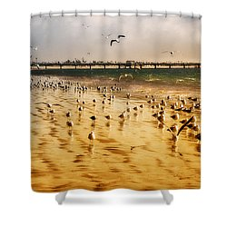 Sunbathing Seagulls Shower Curtain