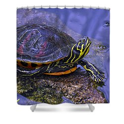 Shower Curtain featuring the photograph Sunbathing Turtle by Betty Denise