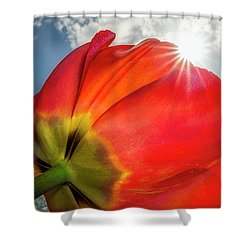 Shower Curtain featuring the photograph Sunbeams And Tulips by Adam Romanowicz