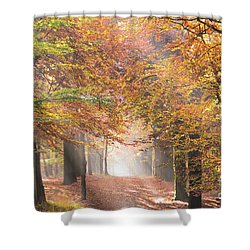 Sunbeams In A Forest In Autumn Shower Curtain
