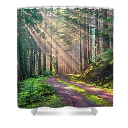 Sunbeams In Trees Shower Curtain