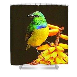 Sunbird Shower Curtain by Betty-Anne McDonald