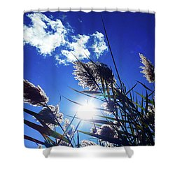 Sunburst Reeds Shower Curtain