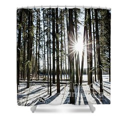 Sundial Forest Shower Curtain by Brad Allen Fine Art