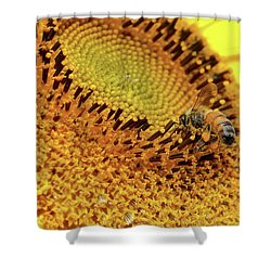 Sunflower 001 Shower Curtain
