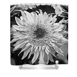 Sunflower 1 Shower Curtain by Simone Ochrym
