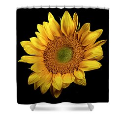 Shower Curtain featuring the photograph Sunflower 2 by James Sage