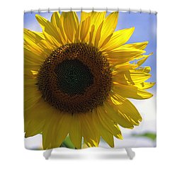 Sunflower 2015 1 Shower Curtain