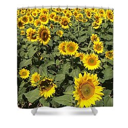 Sunflower 2016 Shower Curtain