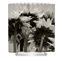 Sunflower 3 Shower Curtain by Simone Ochrym