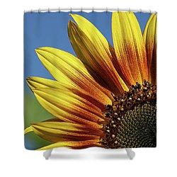 Sunflower 38 Shower Curtain